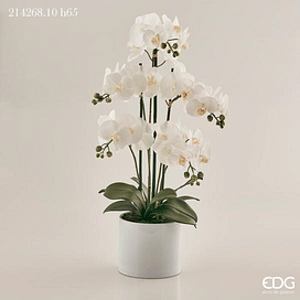 Орхидея EDG Enzo De Gasperi Арт.214268,10