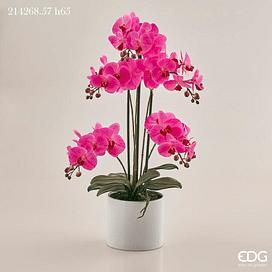 Орхидея EDG Enzo De Gasperi Арт.214268,57