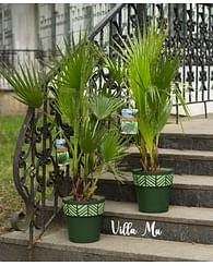 Аренда растений