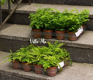 Палета для горшков с растениями \ поддон