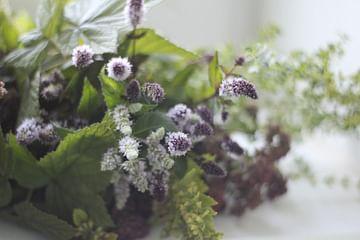 Букет для травяного чая villa Ma