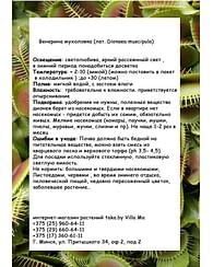 Дионея /Венерина Мухоловка/