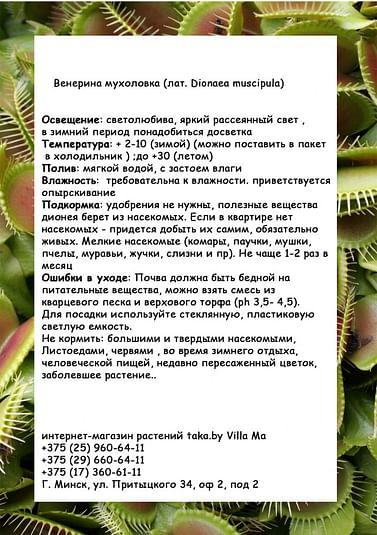 Дионея / Венерина Мухоловка / хищник