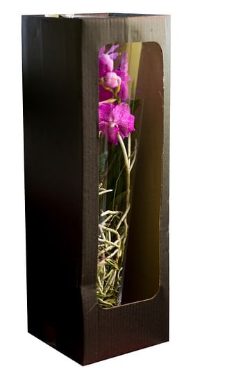 Орхидея королевская Ванда в вазе