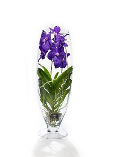 Орхидея королевская большая Ванда в вазе 75СМ