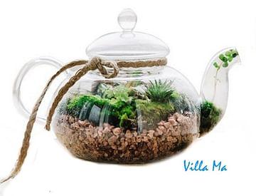 Флорариум в вашей вазе