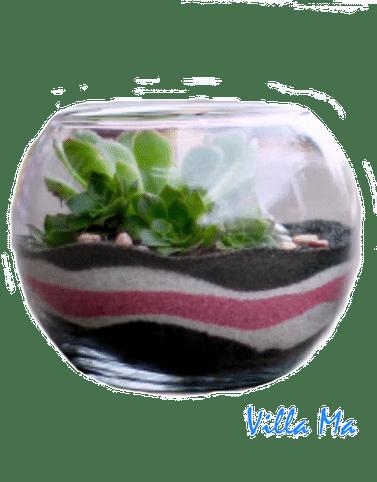 Флорариум Островок с суккулентами