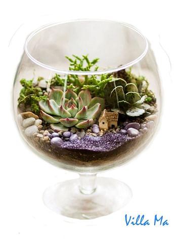 Флорариум в бокале