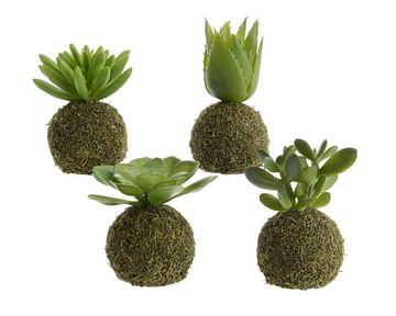 Растение искусственное /кокедама/м