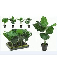 Растение в горшке из пластика искусственное