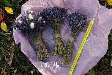 Букет Нежность из лагуруса и лаванды /сухоцветы/