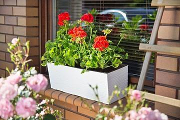 Горшок для цветов Lamela Begonia