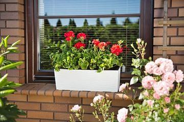 Цветочный ящик Бегония Lamela