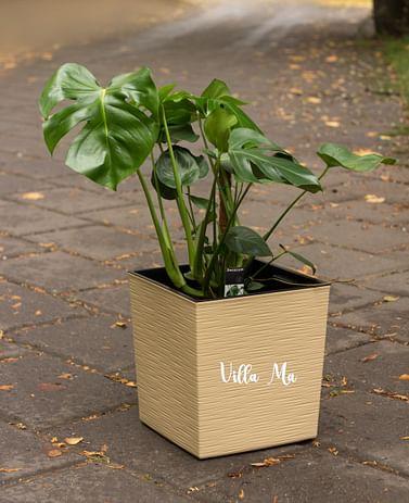 Горшок для цветов Juka Dluto Lamela