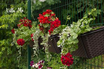 Кашпо цветочная композиция