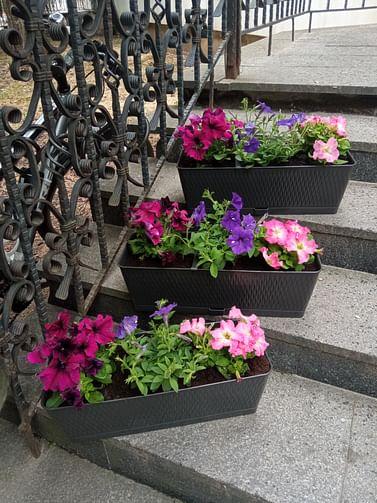 Кашпо - ящик Ротанг с цветами