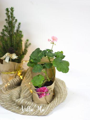 Подарочное оформление небольших горшечных растений villa Ma