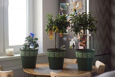 Посадка комнатных растений