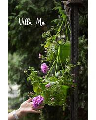 Посадка цветов в вазоны, цветочницы