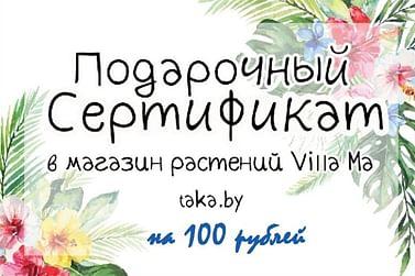 Подарочный сертификат 100