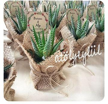 Мини сувениры для гостей из живых растений