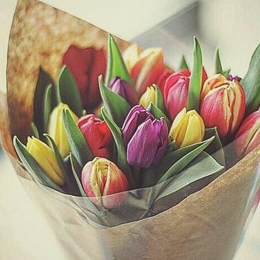 Тюльпаны Елоу Бэби -Букет в горшке