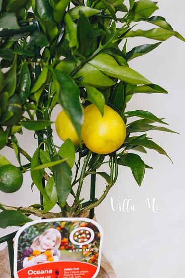 Оранжекват