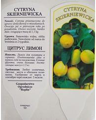 Лимон крупноплодный непривитый большой