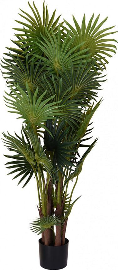 Пальма веерная 120 см