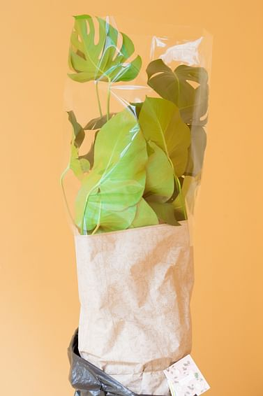 Подарочное оформление и упаковка больших горшечных растений villa Ma