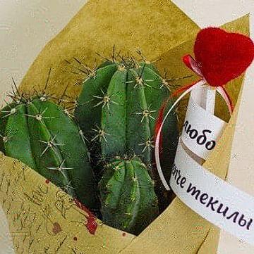 Влюбленный кактус
