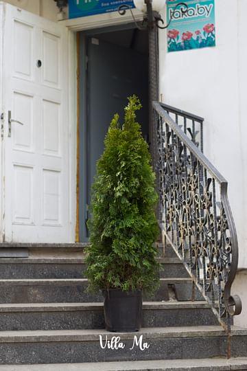 Посадка уличных растений