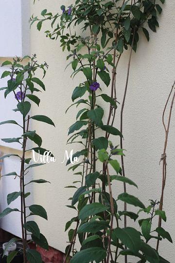Лечение и подкормка уличных растений
