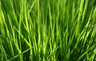 Покос травы в Минске и Минском районе