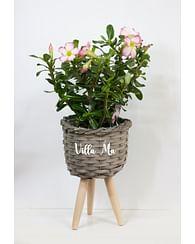 Кашпо для растений плетеное плетеное