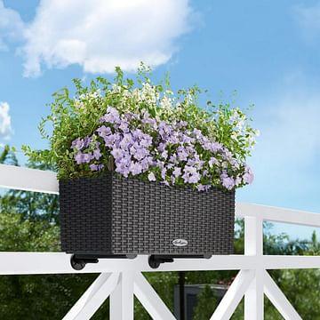 Балконный ящик Лечуза Балконера 80см lechuza