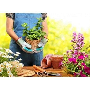 Грунт для растений и добавки