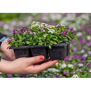 Рассада и саженцы цветов и декоративных растений